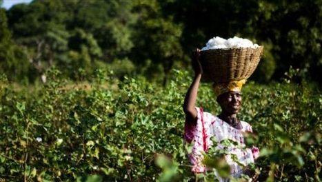 Afrique : pétrole ou agriculture, les...