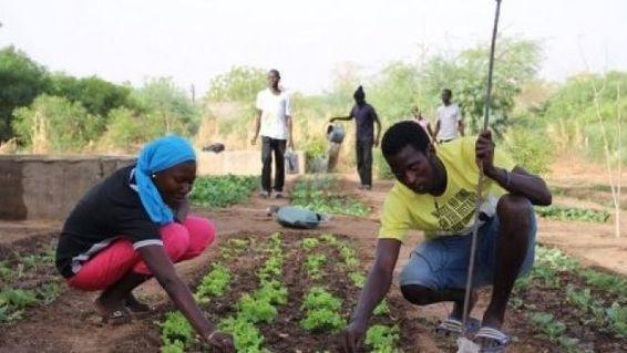 Sénégal : l'ANIDA vise la création de 40 000...