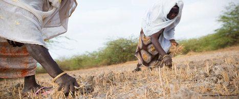 Une technique agricole d'Afrique de l'Ouest...