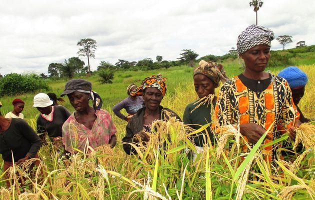 Agroécologie et autonomisation des femmes en...
