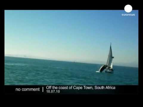Vidéo - quand une baleine plonge sur un voilier et le retourne