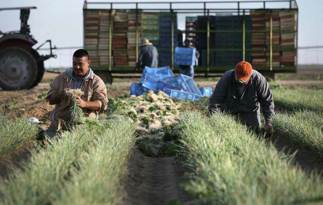 @mysa Farmers hope #immigration reform sow more...