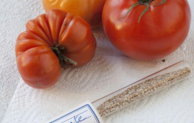 Faire soi-même les semences de tomates. Une vidéo très simple de Rustica.