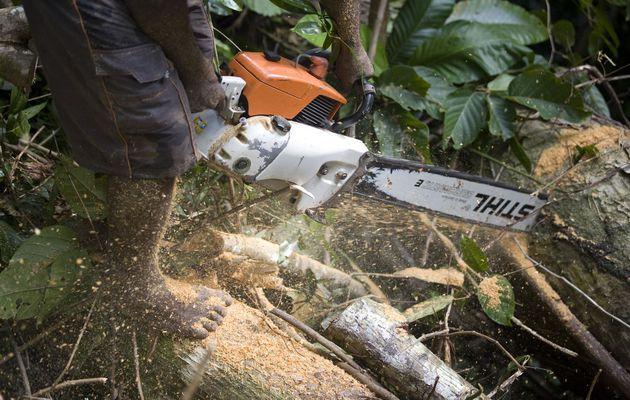 Plus de tronçonneuses Stihl dans les forêts...