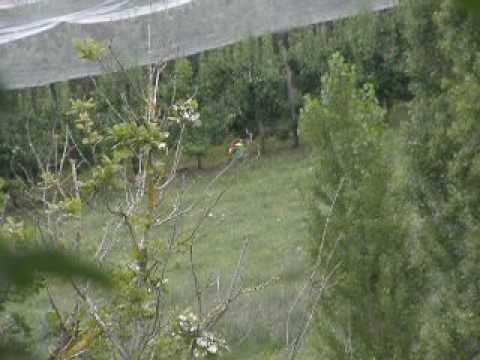 Guêpier d'Europe très fier d'avoir capturé une grosse libellule !
