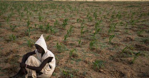 Les villageois sans terre de Mauritanie, obligés...