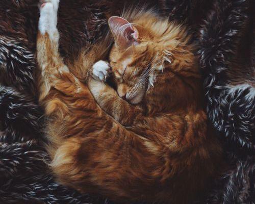 Un chat qui aime la fourrure