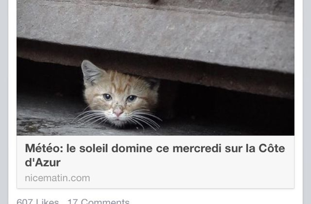 Living in Sin: Nice - Nice Matin wins the internet with cute animal weather reports