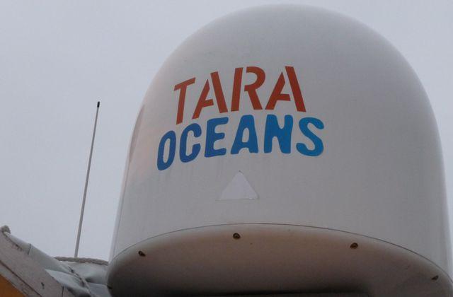 TARA OCEANS, étudier le plancton pour mieux comprendre les océans.