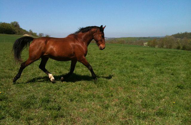 Mon cheval, Bijou