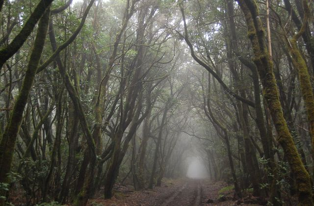 La Gomera - Parc national de Garajonay