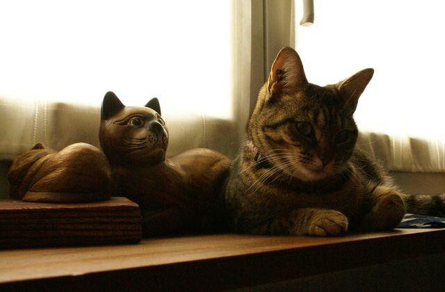 Chérie Cherry et les chats