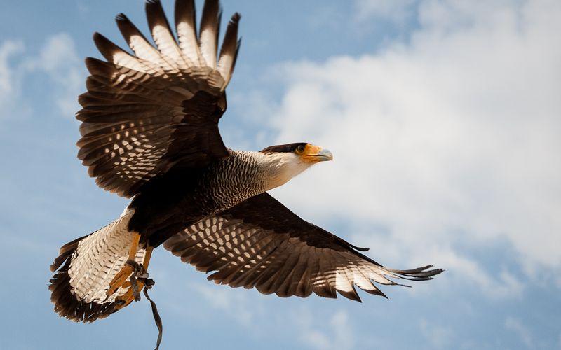 [Photos] Des oiseaux.