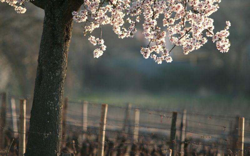 Vlà l'printemps...