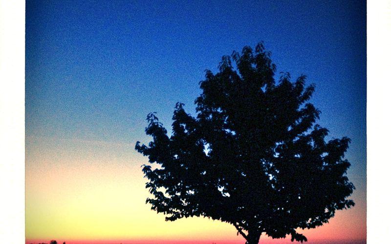 Chassagne-Montrachet : L'aube des vendanges sous l'oeil de Jupiter !