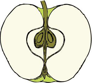 Pomme, la Dentellière