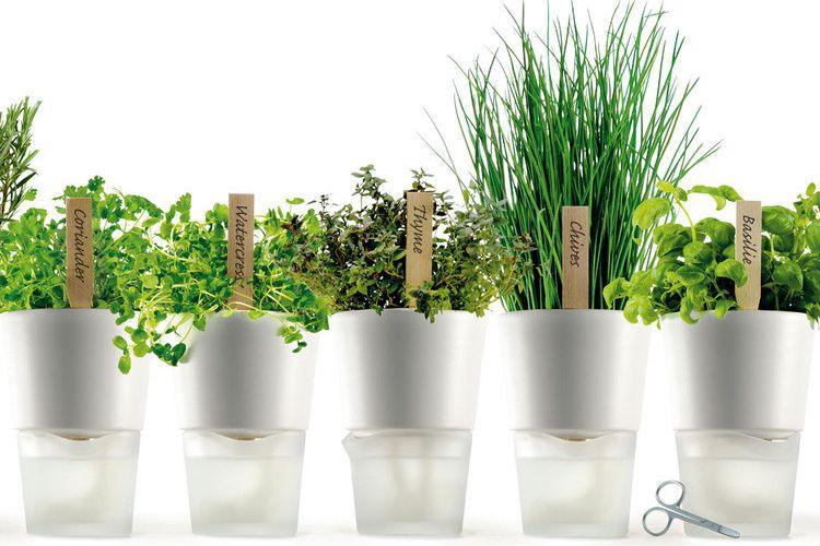Des herbes aromatiques dans ma cuisine