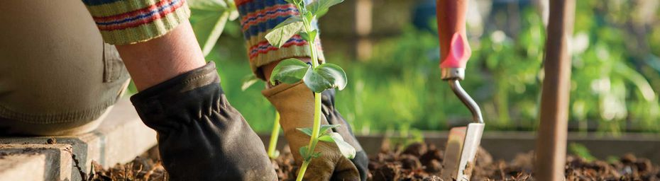 Learn About Successful Tips To Productive Gardening