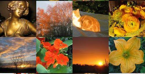 Harmonie de jaune ,orange.