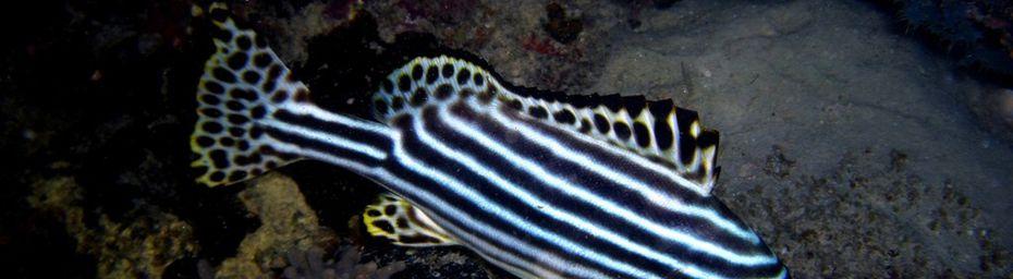 Les nocturnes du lagon de Mayotte !