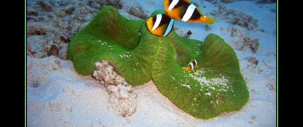 Plongée sous-marine et photos de l'océan Indien