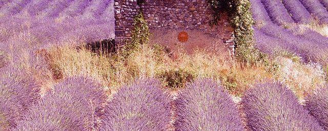 Des gorges du Verdon....au plateau de Valensole....