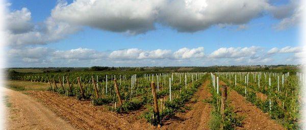 Promenade dans les vignes...