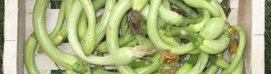 courges serpent à la grecque
