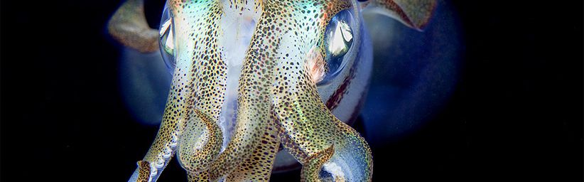 Underwater Photos : squid