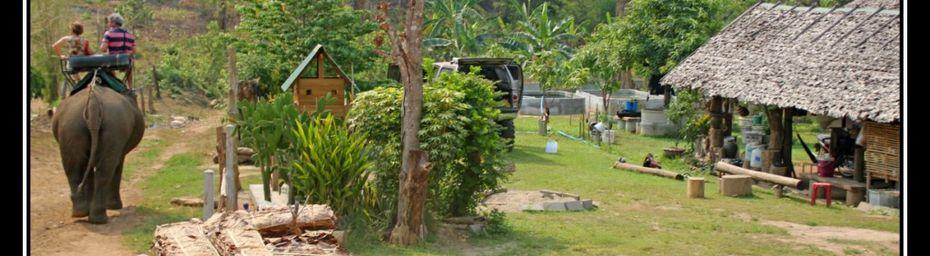 Thaïlande : l'éléphant d'Asie (1)