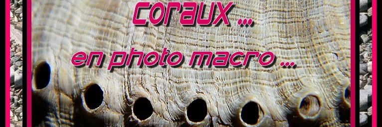 Coquillages...coraux ...