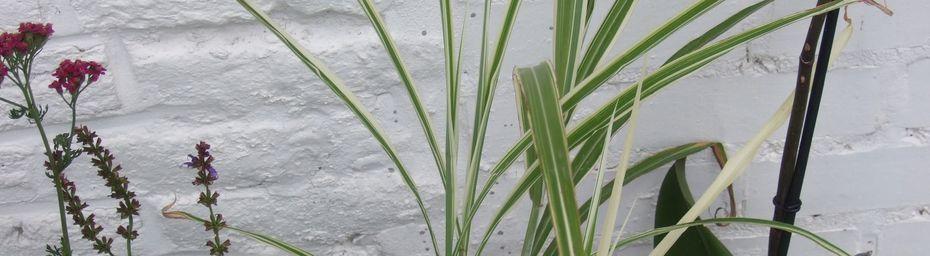 Fête des plantes d'Aywiers
