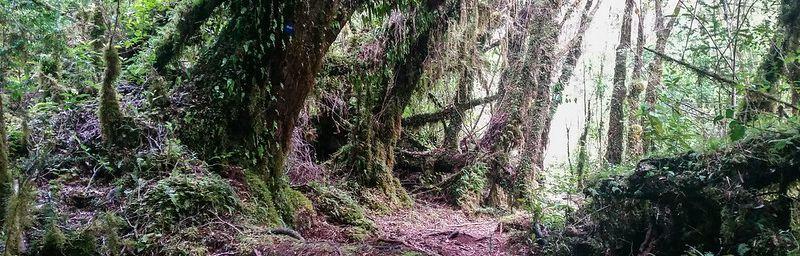 Forêt vierge du sud du Chili - Parque Tantauco (Chiloé)
