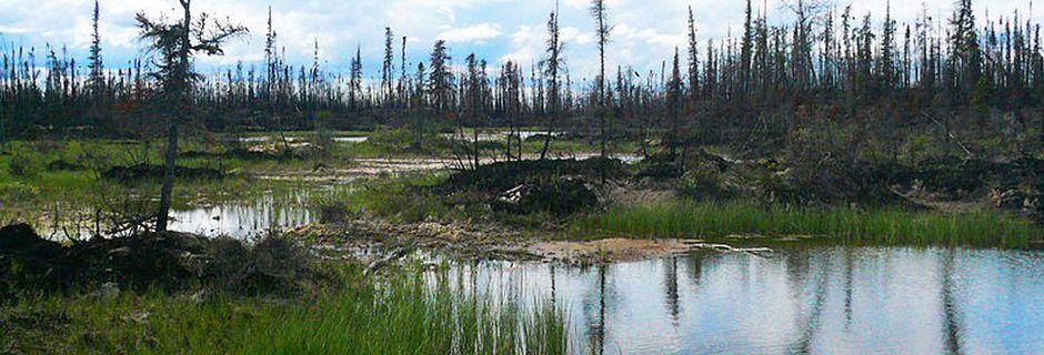 Dans le plus grand des silences, l'Homme dévaste 2,5 millions d'hectares de forêts boréales par an