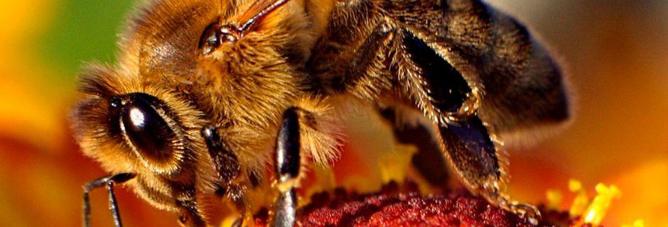 15 chiffres sur les abeilles qui démontrent à quel point elles sont indispensables à notre survie