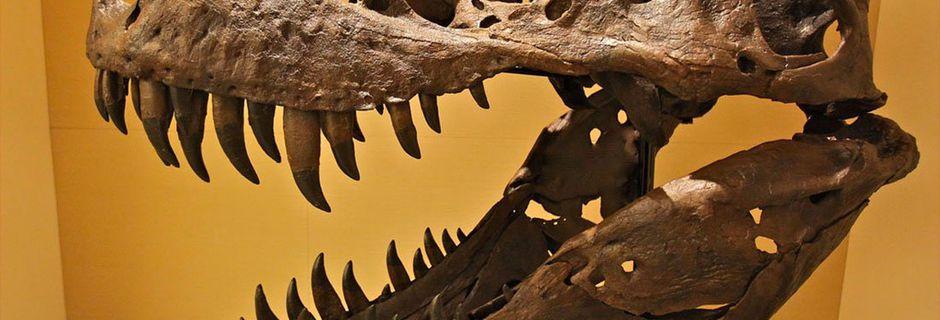 Vous n'imaginez pas à quel point la mâchoire du T-Rex était dévastatrice