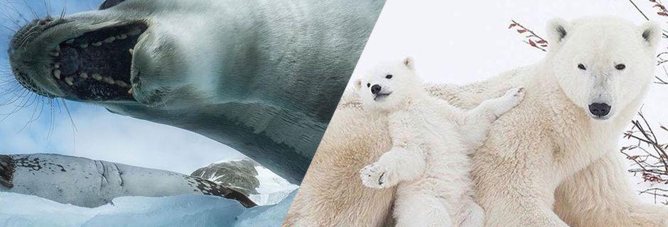 Cette photographe immortalise la faune polaire pour nous montrer à quel point la nature est fragile