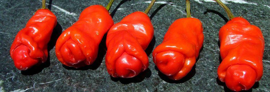 15 anecdotes insolites sur les plantes qui...