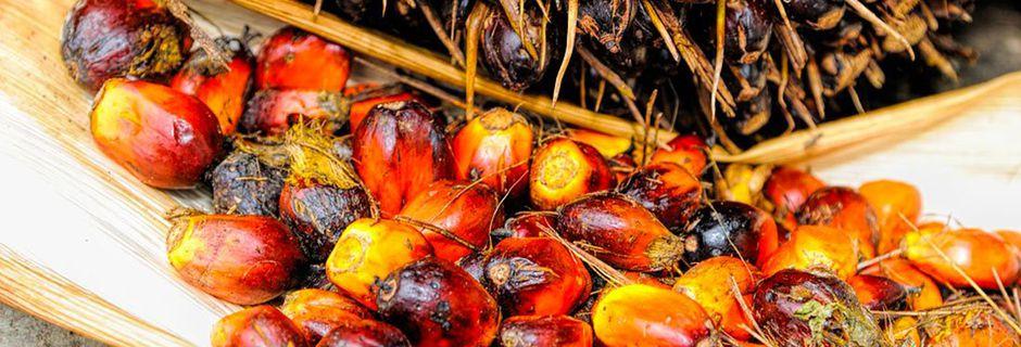 Les multinationales gagnent toujours : 6 agriculteurs péruviens massacrés au nom de l'huile de palme
