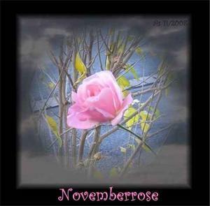 Mein November-Rosen-Elfchen