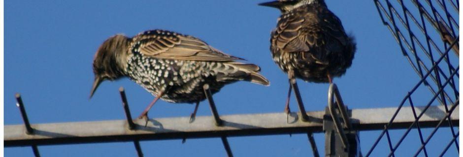 VILLERS SUR AUTHIE : oiseaux