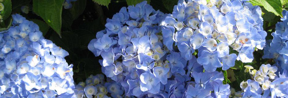 Fleurs du jour