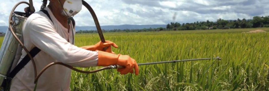 Votre thé est peut-être contaminé : 17 pesticides détectés parmi les plus grandes marques françaises