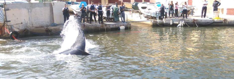 Une baleine coincée dans le port de Marseille, la police live-tweete le sauvetage