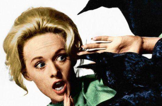 Les Oiseaux, film culte d'Hitchcock, pourrait devenir une série.
