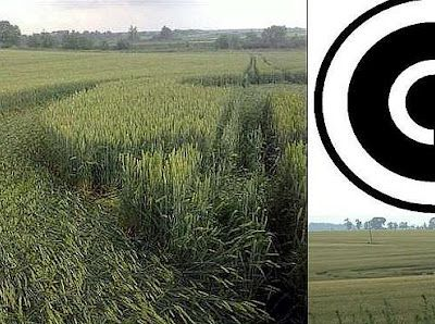 Crop Circle appare in un campo vicino a Leopoli (Ucraina)
