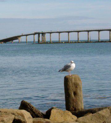 David Peat, un pont entre l'esprit et la matière