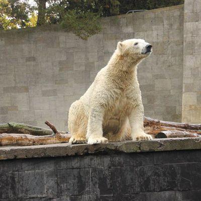 Abschied von Fiete Zoo Rostock 22.10.2016
