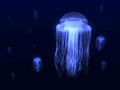 My jellyfish