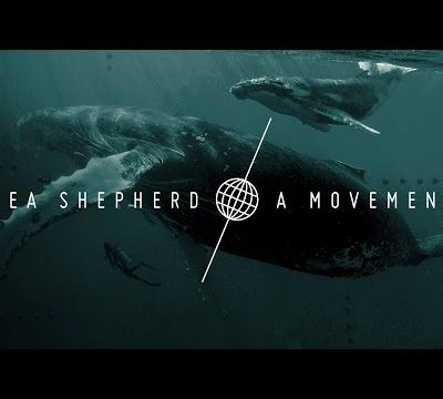 Mountains and Waves soutien SEA SHEPHERD